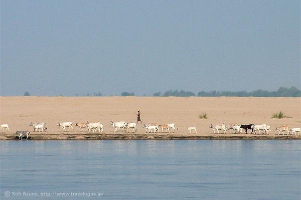 ミャンマーにて。バガンからマンダレーへ向かう航路から見た風景