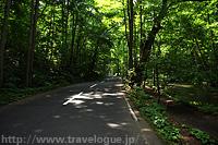 車道のすぐ右が土の歩道、そのすぐ右が渓流