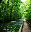 夏の奥入瀬渓流ハイキング