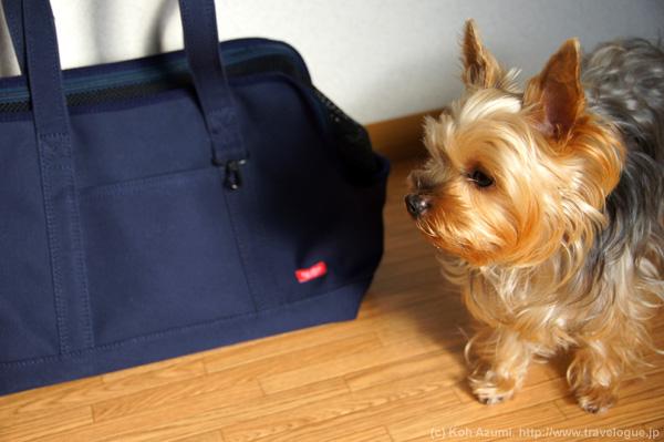 新しいキャリーバッグとチョコさん