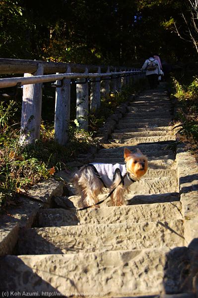 チョコさんは階段を登るのが大得意!