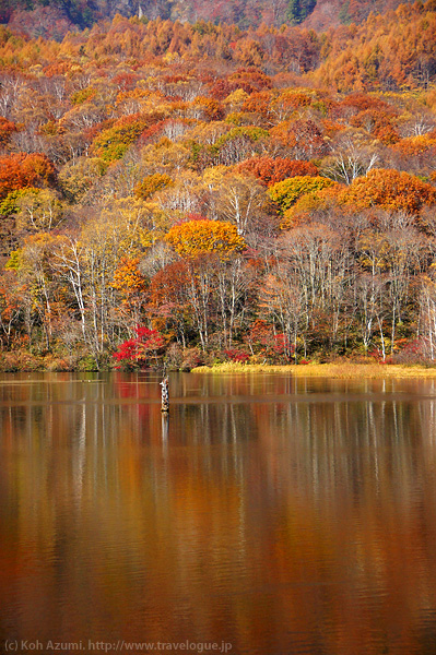 紅葉した森が映る鏡池の静かな水面