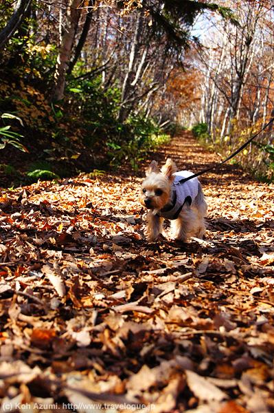 蓮池から琵琶池までの森の中の道を歩く。