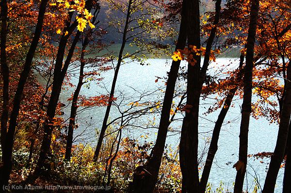志賀高原を紅葉散歩