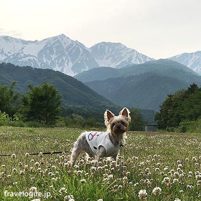 ワンコと一緒に初夏の白馬で自然の中をお散歩