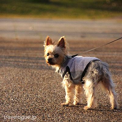 犬連れで三崎マグロが食べられるペット可の海鮮丼のお店