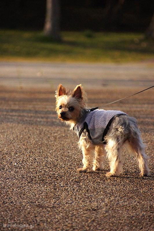 城ヶ島公園で愛犬と散歩