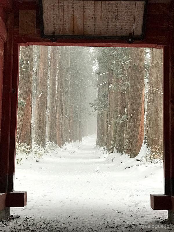 随神門からの杉並木