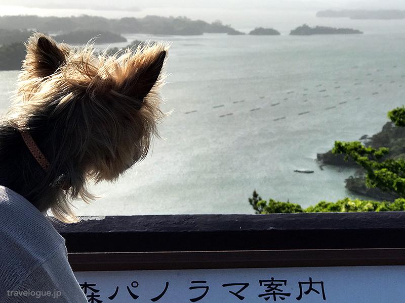 大高森から海を見るチョコさん