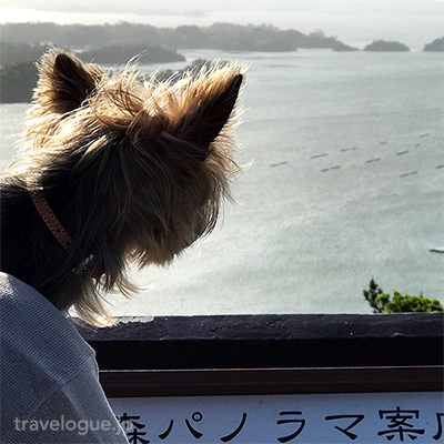 奥松島の大高森をワンコと一緒にお散歩して絶景を満喫した!