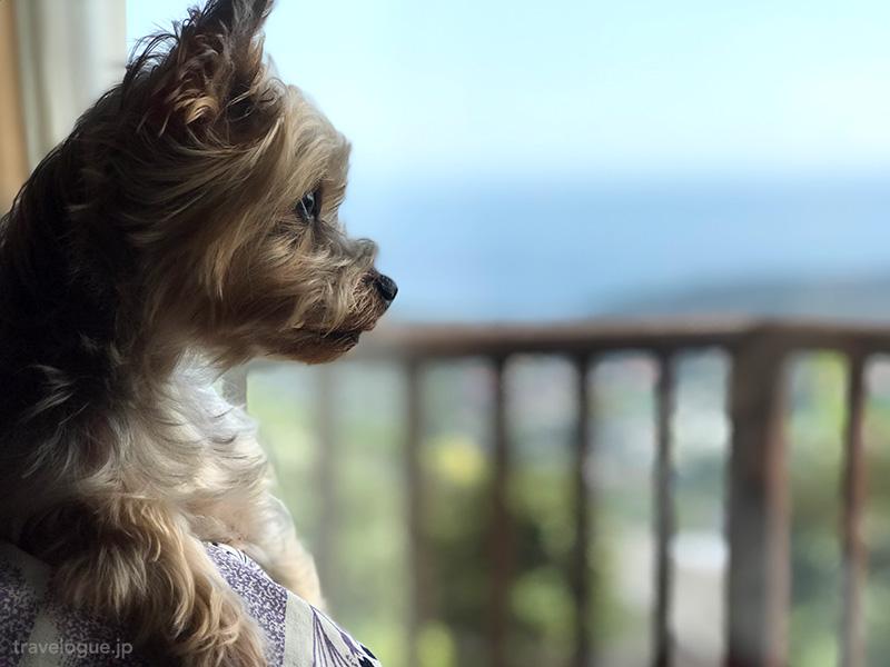 茉莉風から海を見るチョコさん